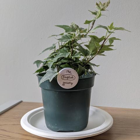 plant profile pic